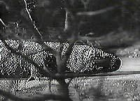 Image from: Giant Gila Monster, The (1959)